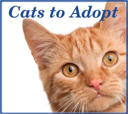Cats to Adopt