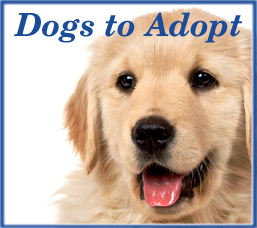 Dogs to Adopt