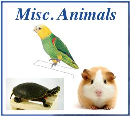 Misc. Animals